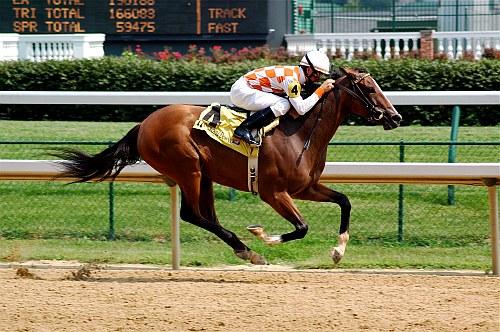 A horse race in Louisville, Kentucky